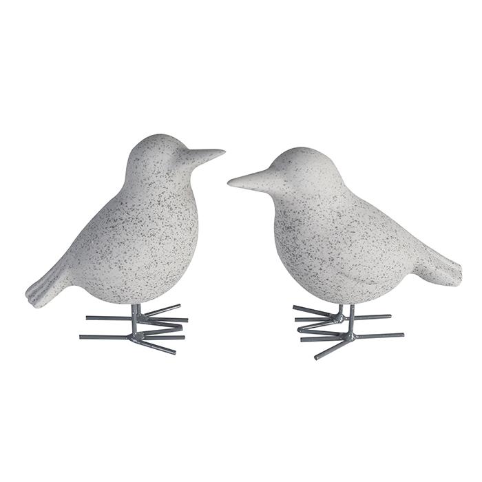 Vögelchen Kalli